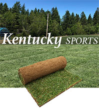 gazon en rouleau tourbe kentucky sports